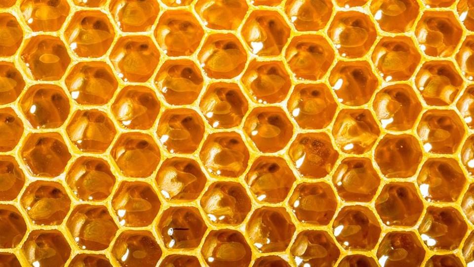 Inserción internacional de las mieles del Consorcio de Exportación de miel del Sudoeste Bonaerense
